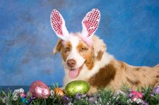 Easter Bunny Pet Photos