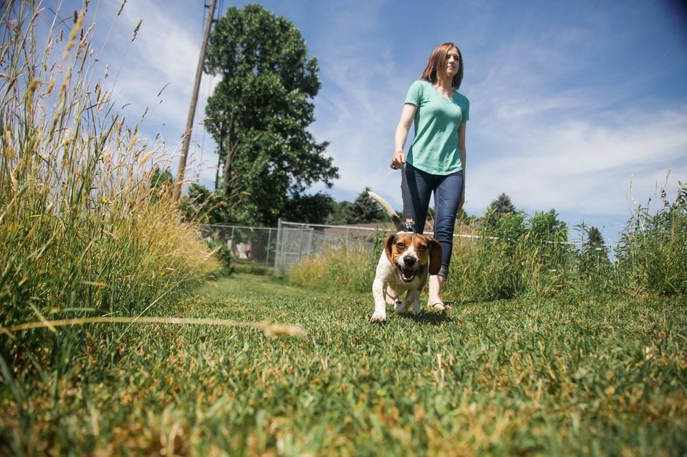 Pet Shelter Volunteer